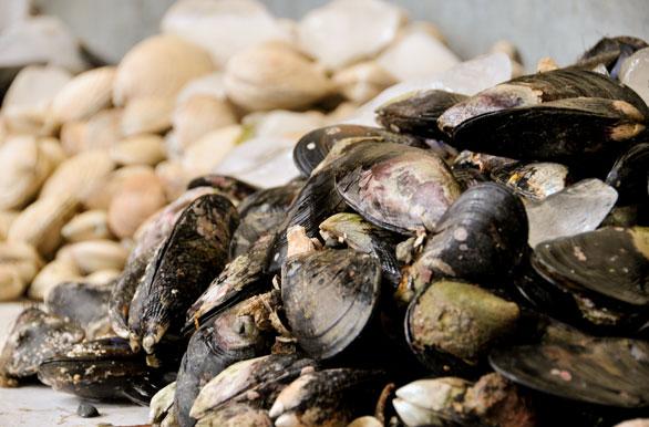 Manjares del mar